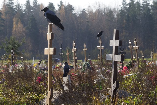 Crows sit on grave crosses in the section of a cemetery reserved for coronavirus victims in Kolpino, outside St. Petersburg, Russia, Tuesday, October 12, 2021. Russia hit another record of daily coronavirus deaths Tuesday as the country struggled with a rapid surge of infections and lagging vaccination rates, but authorities have been adamant that there would be no new national lockdown. (Photo by Dmitri Lovetsky/AP Photo)