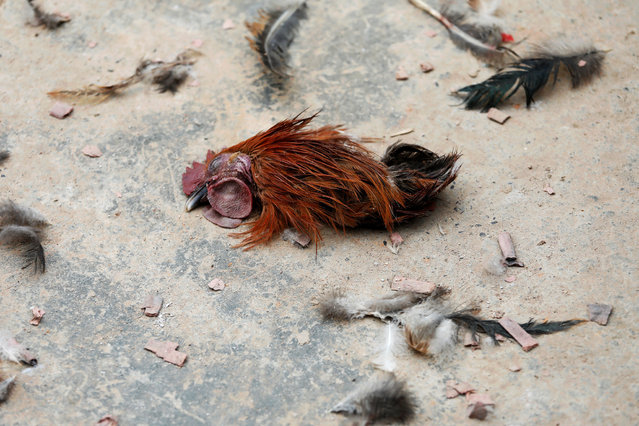 "The head of a chicken is seen on the ground during a traditional wedding ritual. It is rooted in the past when a bride was expected to marry a cousin, according to village chief Huang Xuexian. If she wished to marry outside the family, her suitor and cousin would compete to be the first to bite off the head of a tethered chicken or duck and ""win"" the bride. This ritual was abandoned long ago as attitudes on marriage changed, said Huang. (Photo by Tyrone Siu/Reuters)"