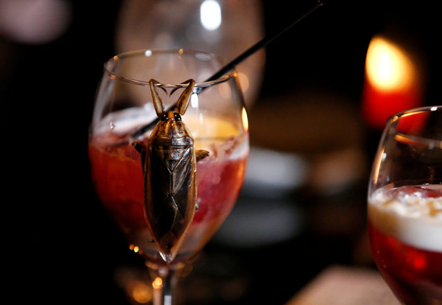 A water bug is seen on a glass of a cocktail with whipped cream containing juice of water bugs at a bar in downtown Tokyo, Japan, February 12, 2017. (Photo by Toru Hanai/Reuters)