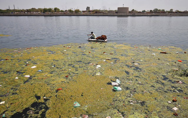 A man collects coconuts thrown as offerings by worshippers on the weed covered Sabarmati river, ahead of World Water Day, in Ahmedabad, March 21, 2017. (Photo by Amit Dave/Reuters)
