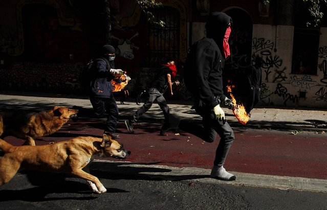 Protesters run forward as they prepare to throw petrol bombs towards police during violent clashes in Santiago, Chile, on May 8, 2014. Tens of thousands of students protested in Chile in a mostly peaceful protest that was marred at the end by violent clashes with police. This was the first march demanding education reform since President Michelle Bachelet took power on promises of significant changes. (Photo by Luis Hidalgo/Associated Press)