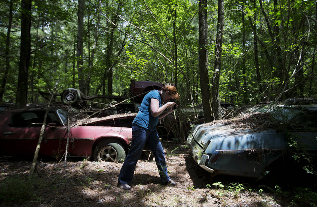 """Judith Kimber, of Belfast, Northern Ireland, takes a photo while walking through Old Car City, the world's largest known classic car junkyard Thursday, July 16, 2015, in White, Ga. """"I love old American cars"""", Kimber said. """"There are many more cars than I imagined. I love it"""". (Photo by David Goldman/AP Photo)"""