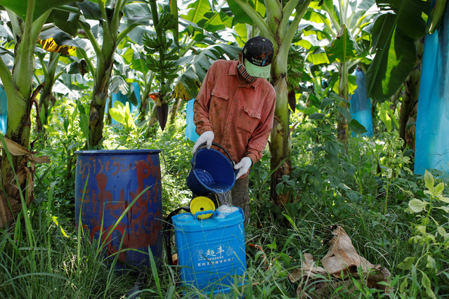 A man prepares pesticide before spaying it at a banana plantation operated by a Chinese company in the province of Bokeo in Laos April 24, 2017. (Photo by Jorge Silva/Reuters)