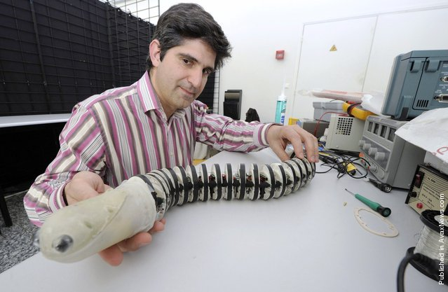 Professor Cesare Santanini from the engineering high school Sant'Anna in Pontedera, Italy, displays a lamprey-like robot at the Engineering-Ecole des Mines in Nantes, France, during a bionic robots workshop on April 7, 2011