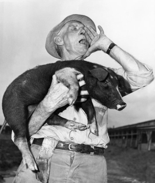 """""""Whoooooooooeeeee, pig, pig, pig"""" yells lusty-lunged Fred Shaw shown  June 20, 1947, national hog-caller champion of Memphis, Tennessee for two years who has decided not to defend his title this year. His decision to retire was made following an exchange of bellows via transatlantic telephone with England's prize towncrier, James Morris, of Cornwell, England. (Photo by AP Photo/AWS)"""