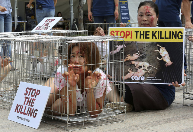 A South Korean animal rights activist confines herself in a cage during a campaign opposing South Korea's culture of eating dog meat in Seoul, South Korea, Friday, August 11, 2017. Some of South Koreans traditionally eat dog meat on Aug. 11, with the belief that it boosts stamina and virility and will help them endure the heat of summer. (Photo by Ahn Young-joon/AP Photo)