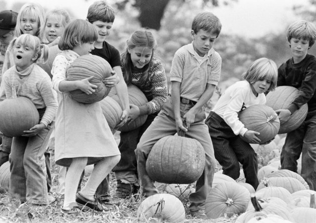 Second-graders pick their pumpkins during a class outing October 19, 1984, at a farm next to their school near Doylestown, Pa.  While their pumpkin-toting techniques vary, the children will soon have their Halloween jack-o-lanterns ready for October's end. (Photo by George Widman/AP Photo)