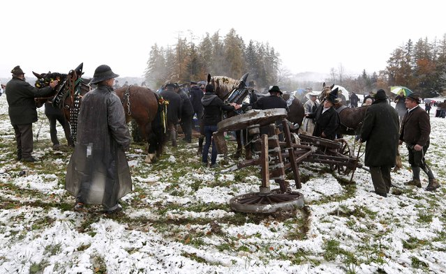 Farmers in traditional Bavarian costumes attend to a wooden carriage turned over during the Leonhard procession in Bad Toelz November 6, 2014. (Photo by Michaela Rehle/Reuters)