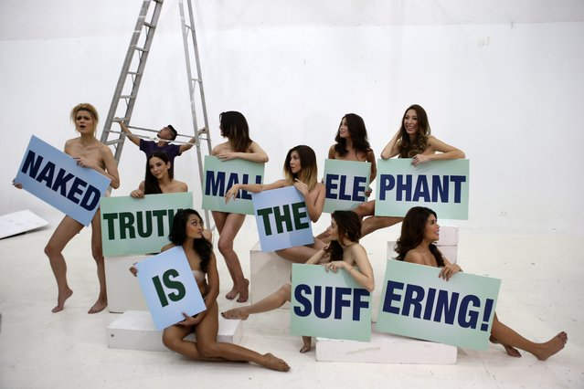 """Filipino models and entertainers hold placards reading """"Naked Truth: Mali the Elephant Is Suffering"""" during a photo shoot for a new ad for People for the Ethical Treatment of Animals (PETA) Asia inside a photo studio in Makati's financial district south of Manila,  Philippines, 05 February 2013, calling for the transfer of Mali from solitary confinement at the Manila Zoo. The supposed worsening condition of Mali, the 38-year-old Sri Lankan elephant, inside city-run zoo prompted the Philippine Congress which handles the House Committee on Natural Resources to approve a resolution supporting the immediate her transfer to Boon Lott's Elephant Sanctuary in Thailand. Several non-government organizations commend the House resolution. Various groups, on the other hand, are opposing the transfer, saying it will jeopardize the animal's condition more. Almost a year ago, Philippine President Benigno Aquino III ordered the Bureau of Animal Industry (BAI) to study if Mali is fit to be transferred to a sanctuary. Representatives of BAI, however, are having difficulties in extracting blood samples from the elephant. (Photo by Dennis M. Sabangan/EPA)"""
