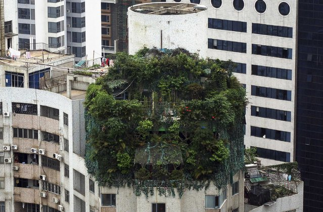 A suspected illegal construction is seen covered by green plants atop a 19-storey residential building in Guangzhou, Guangdong province in this April 11, 2014 file photo. (Photo by Reuters/China Daily)