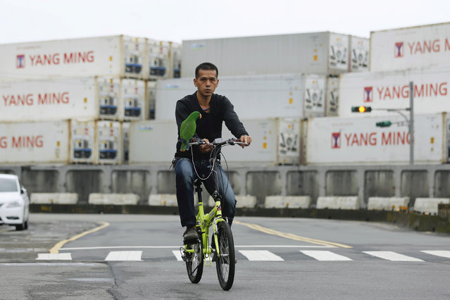 A man rides a bicycle with his parrot in front of containers at Keelung port, northern Taiwan, March 20, 2016. (Photo by Tyrone Siu/Reuters)