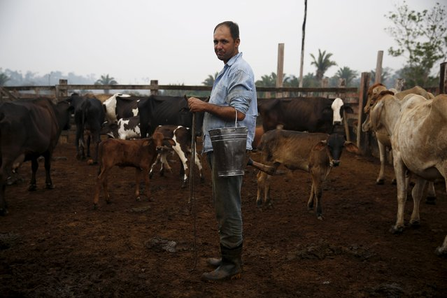 Edivaldo Fernandes Oliveira stands next to his cows before milking them in the village of Rio Pardo next to Bom Futuro National Forest, in the district of Porto Velho, Rondonia State, Brazil, September 1, 2015. (Photo by Nacho Doce/Reuters)