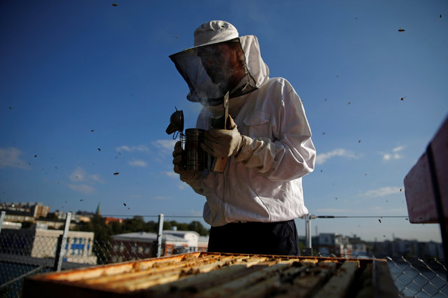 Pim Bendt, cultivation principal at Bee Urban, adjusts a smoker as he works with the bees at the rooftop terrace in Stockholm, Sweden, September 13, 2016. (Photo by Maxim Shemetov/Reuters)