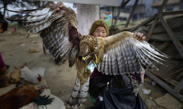 A Naga boy sells an eagle on the eve of the New Year in Kohima, Nagaland state, India, 31 December 2015. Wild bird is a delicacy among the Naga tribal people inhabited in Manipur and Nagaland states and they hunt wild birds on festive season as their tradition. (Photo by Rajat Gupta/EPA)