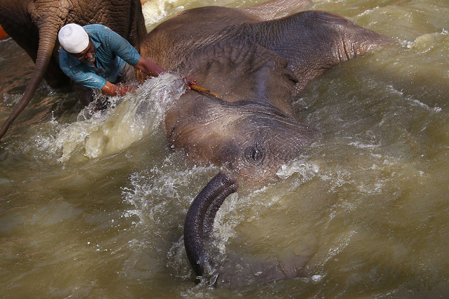 Elephants cool off at a zoo in Karachi, Pakistan, 31 March 2021. Caretakers at Karachi's zoo were working to keep animals cool during a heatwave affecting southern Pakistan. (Photo by Shahzaib Akber/EPA/EFE)