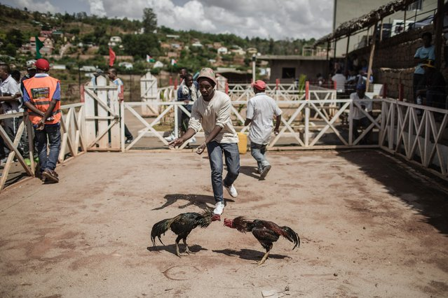 Jockeys and owners spur their roosters with water and shouting during a Cock fighting tournament on December 3, 2016 on the outskirts of Antananarivo. (Photo by Gianluigi Guercia/AFP Photo)