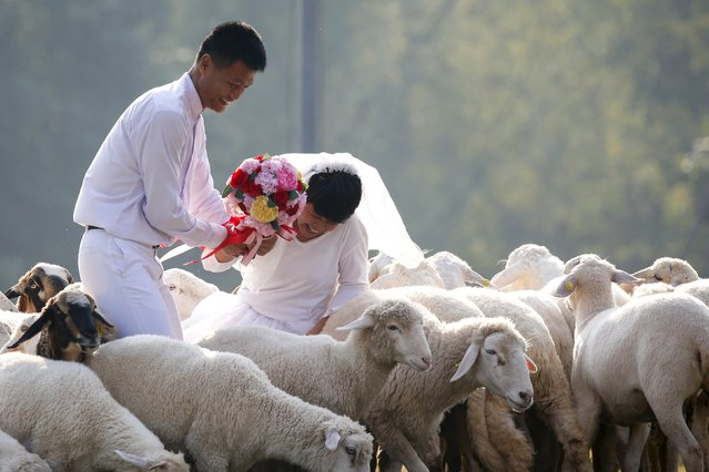 Groom Major Thipilindhra Chidee and his bride Laddawal Chaidee are seen among sheep during a wedding ceremony ahead of Valentine's Day at a resort in Ratchaburi province, Thailand, February 13, 2016. (Photo by Athit Perawongmetha/Reuters)