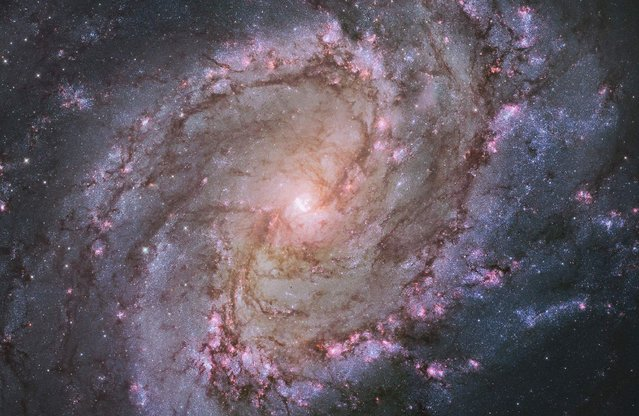 "The barred spiral galaxy M83, also known as the Southern Pinwheel, is seen in a NASA Hubble Space Telescope mosaic released January 9, 2014. The Hubble photograph captures thousands of star clusters, hundreds of thousands of individual stars, and ""ghosts"" of dead stars called supernova remnants. (Photo by Reuters/NASA)"