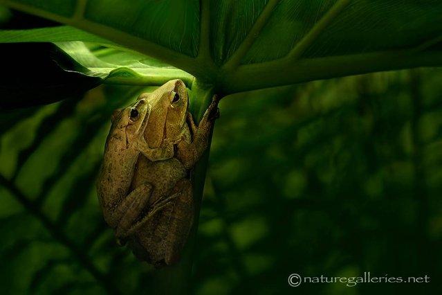 Wildlife Photography By Sompob Sasi-smit