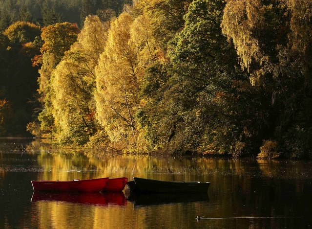 Moored boats are seen on Loch Faskally, as autumn leaves are reflected in the water, in Pitlochry, Scotland October 18, 2016. (Photo by Russell Cheyne/Reuters)