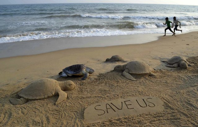 Boys run near sand sculptures of Olive Ridley turtles made by Indian sand artist Sudarshan Pattnaik, next to a dead turtle at the beach in Puri, in the eastern Indian state of Odisha February 9, 2014. (Photo by Reuters/Stringer)