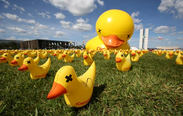 "Inflatable dolls in the shape of ducks are seen in front of the National Congress during a protest against tax increases in Brasilia, Brazil, March 29, 2016. The campaign ""I will not pay the Duck"" is organized by the Federation of Industries of Sao Paulo (FIESP) and uses the duck symbol in reference to industries that pay high taxes. (Photo by Gregg Newton/Reuters)"