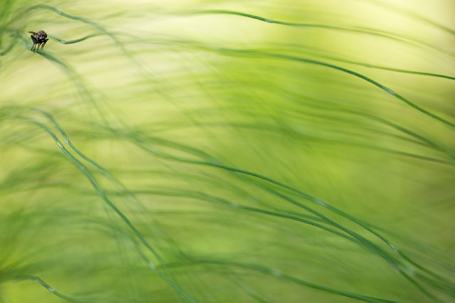 """Other animals, second place: Sebastian Vogel, """"Hidden in the horsetail grass"""" (fly). (Photo by Sebastian Vogel/2019 GDT Nature Photographer of the Year)"""