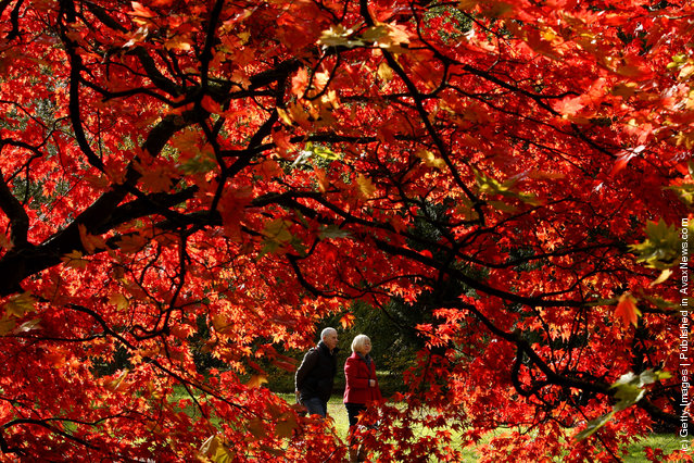 Visitors walk through Westonbirt Arboretum in the Cotswolds near Tetbury on October