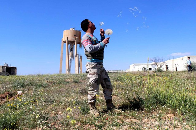 A rebel fighter blows the seeds of a dandelion flower on April 13, 2014 in the outskirts of the village Papoulan, in Idlib province. Syrian President Bashar al-Assad said that the war that has torn Syria apart for three years and cost more than 150,000 lives is turning in the government's favour, state news agency SANA reported. (Photo by Hass News/Ali Nasser/AFP Photo)