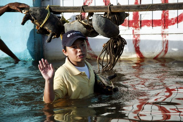 A boy and gestures near people evacuating turtles in a flooded zone in Guasdualito, in the state of Apure, Venezuela, July 4, 2015. (Photo by Carlos Eduardo Ramirez/Reuters)