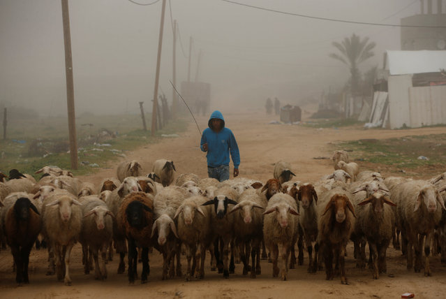 A Palestinian herds livestock on a foggy morning in the northern Gaza Strip February 26, 2017. (Photo by Mohammed Salem/Reuters)