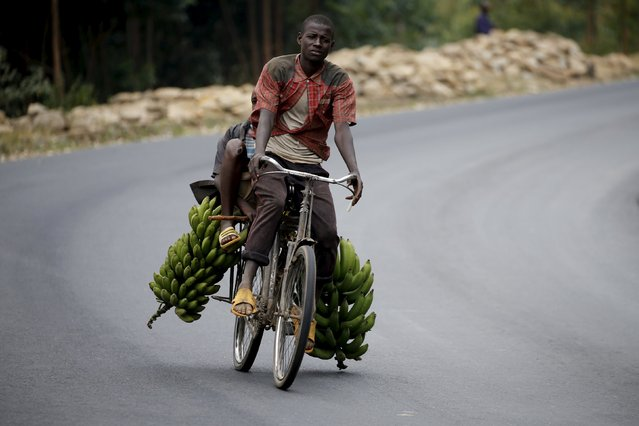 A Burundian man transports a load of bananas from a rural area to markets in the capital Bujumbura as the country awaits next week's presidential elections, July 19, 2015. (Photo by Mike Hutchings/Reuters)