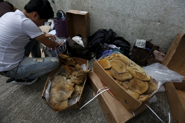 A man handles portions of frozen beef tripe from Brazil on a back street at an industrial area in Hong Kong before they are smuggled across the border into mainland China, July 8, 2015. (Photo by Bobby Yip/Reuters)