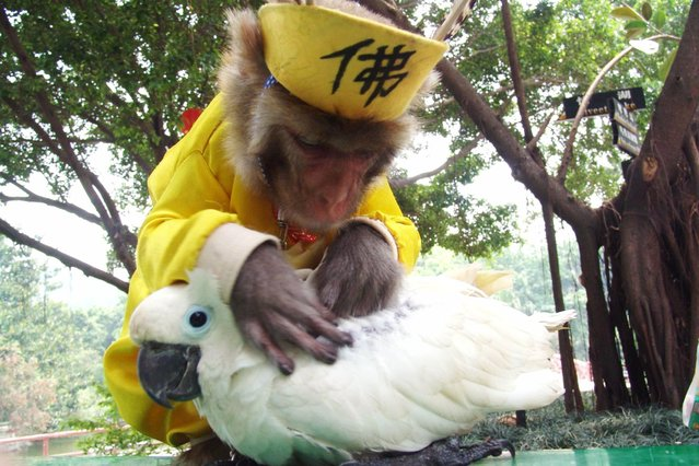 A monkey helps a parrot get rid of lice at a wild animal park in Shenzhen, south China's Guangdong province, in this picture taken on April 23, 2005. (Photo by Reuters/China Newsphoto)