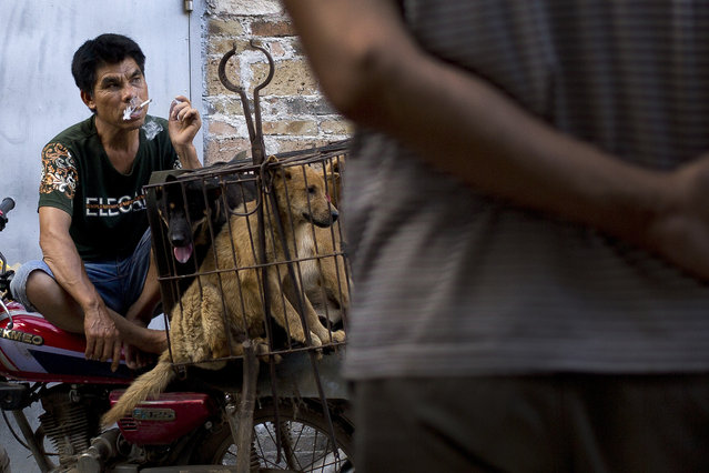 A vendor smokes as he waits for buyers next to the dogs in a cage for sale at a market during a dog meat festival in Yulin in south China's Guangxi Zhuang Autonomous Region, Tuesday, June 21, 2016. Seeking to end what they call a cruel and unsanitary ritual, animal rights activists are working to end an annual dog meat feast in the southern Chinese town. (Photo by Andy Wong/AP Photo)