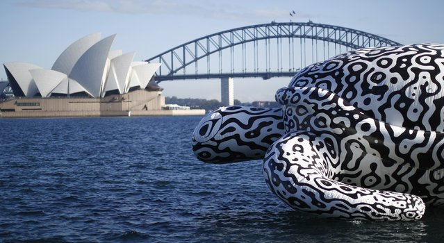 """A floating sculpture named """"Alpha Turtle"""" is pictured in front of the Sydney Opera House and Harbour Bridge, August 15, 2014. The five-metre-tall and 15 metre-long sea turtle featuring a black and white rendering of coral reef structures was floated past the iconic Sydney landmarks on Friday to promote an undersea art exhibition at the Sea Life Sydney Aquarium. (Photo by Jason Reed/Reuters)"""