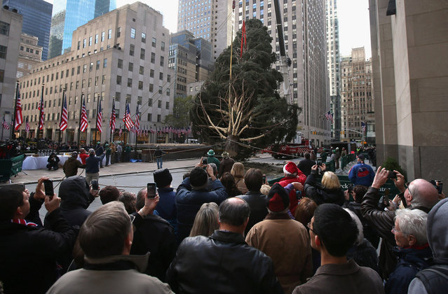 People watch as the Rockefeller Center Christmas tree is raised into position in New York City. The tree, an 80-year old Norway Spruce, was donated by Joe Balku of Flanders, New Jersey. It weighs approximately 10 tons, measures 80 feet tall and is 50 feet in diameter. The official tree-lighting ceremony will be Wednesday, November 28. (Photo by John Moore)