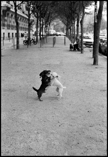 Puppy love, Paris. 1980ties. (Photo and comment by Peter Turnley)