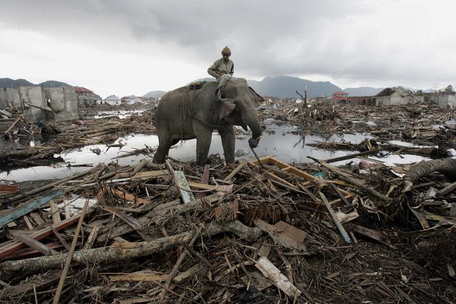 In this January 10, 2005 file photo, an elephant which belongs to forest ministry removes debris in Banda Aceh, Indonesia. (Photo by Eugene Hoshiko/AP Photo)