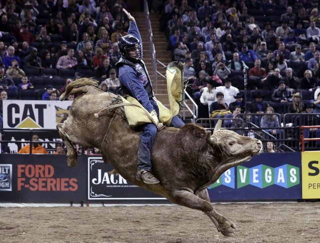 Eduardo Aparecido, from Decatur, Tx., rides Dirty Deal during the Professional Bull Riders Buck Off, in New York's Madison Square Garden, Saturday, January 17, 2015. (Photo by Richard Drew/AP Photo)