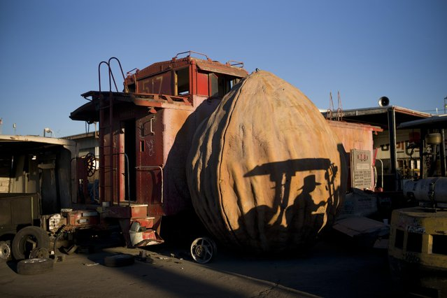 In this Thursday, November 19, 2015 photo, a junkyard employee casts a shadow on a giant walnut sculpture at Aadlen Brothers Auto Wrecking, also known as U Pick Parts, in the Sun Valley section of Los Angeles. The family business is closing on New Year's Eve, and everything must go by then, the cars, the shark, the arches, even the giant car-crushing machine. (Photo by Jae C. Hong/AP Photo)
