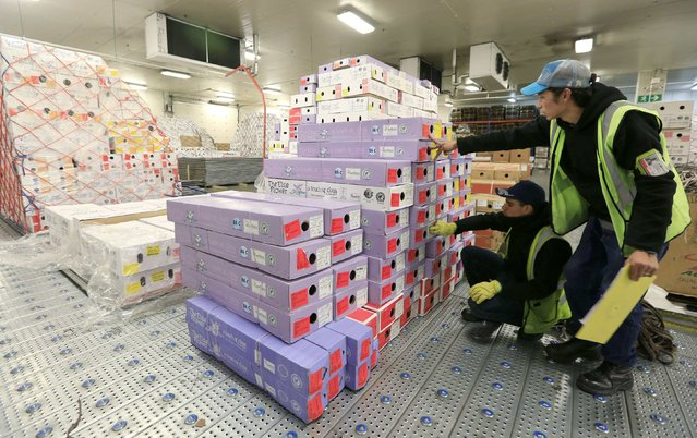 1Airline LAN workers organize boxes of flowers to be exported ahead of Valentine's Day in Bogota's airport, February 4, 2015. (Photo by John Vizcaino/Reuters)