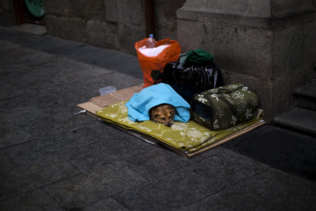 A dog lies down as its owner begs on a street nearby in Madrid, Spain, Wednesday, February 11, 2015. (Photo by Emilio Morenatti/AP Photo)