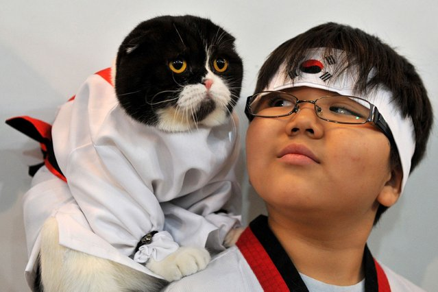 A boy and his Scottish Fold cat dressed in a kimono costume attend a cat exhibition in Bishkek, Kyrgyzstan, on Oktober 22, 2013. Cat lovers from Kyrgyzstan, Kazakhstan and Uzbekistan took part in the exhibition. (Photo by Vyacheslav Oseldko/AFP Photo)