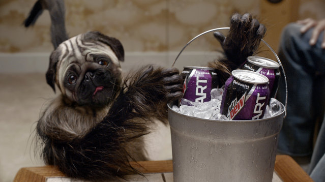 """This image provided by Mountain Dew shows a """"Puppymonkeybaby"""" in a scene from the company's Kickstart spot for Super Bowl 50. (Photo by Mountain Dew via AP Photo)"""