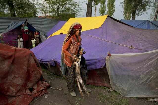 A Bakarwal nomad woman Zeba Khan looks at camera as she carries a baby goat outside a temporary shelter on the outskirts of Srinagar, Indian controlled Kashmir, Tuesday, April 21, 2015. (Photo by Dar Yasin/AP Photo)
