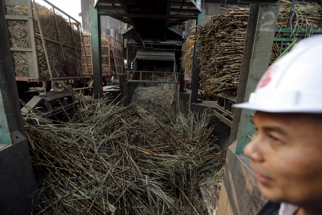 Trucks deliver the sugar cane harvest inside a sugar mill at Pakchong district in Ratchaburi province, Thailand March 22, 2016. (Photo by Jorge Silva/Reuters)