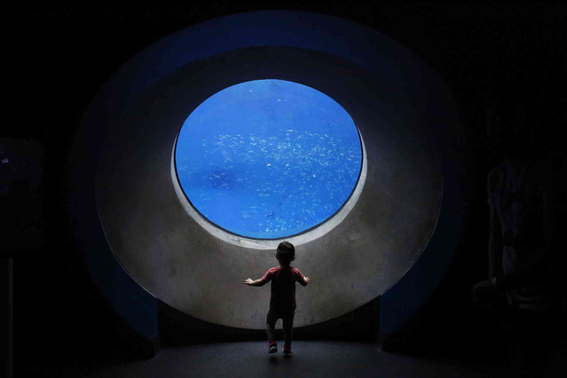 A young child looks into a window of fish at the Phillip and Patricia Frost Museum of Science on Sunday, June 9, 2019, in Miami. (Photo by Brynn Anderson/AP Photo)