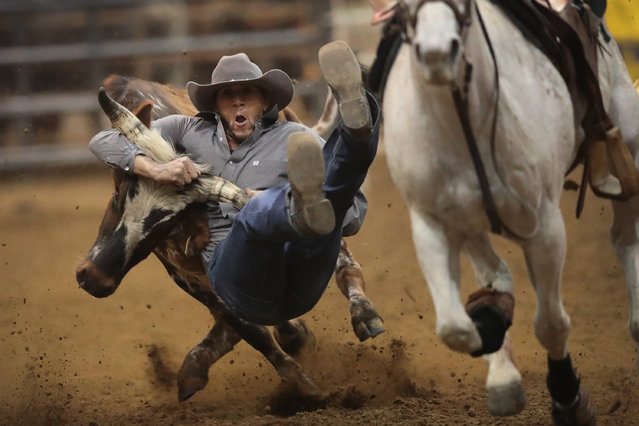 Chase Crain participates in the bull doggin competition at the Bill Pickett Invitational Rodeo on April 1, 2017 in Memphis, Tennessee. The Bill Pickett Rodeo is the nations only touring black rodeo competition. The rodeo celebrates western heritage and the contributions that black cowboys and cowgirls have made to the sport of rodeo. (Photo by Scott Olson/Getty Images)