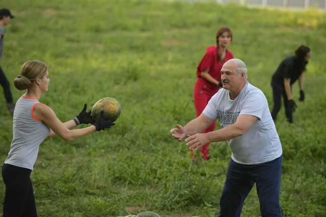Belarus' President Alexander Lukashenko takes part in harvesting watermelons at his garden on the outskirts of Minsk, Belarus on August 29, 2019. (Photo by Andrei Stasevich/BelTA/Handout via Reuters)